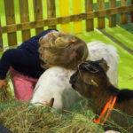 Ce week-end, on se balade à la ferme