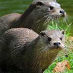 Zoodyssée, le parc animalier respectueux des hommes, des animaux et de l'environnement